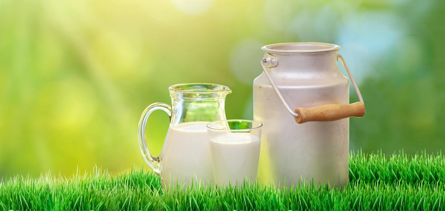 Leches y Bebidas Lácteas